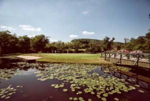 View of lilypads over the lake course, The Vale Resort, Wales